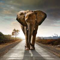 shooting an elephant essay topics